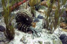 Ammoniten 4